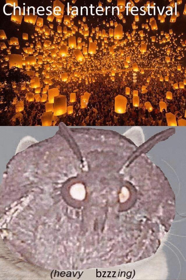 Chinese Lantern Festival Moth Memes
