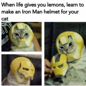 When life gives you lemons cat memes